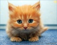 An adorable kitten because, why not?